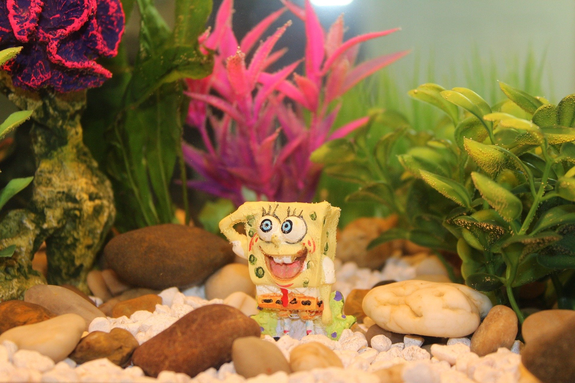 fish-tank-angiejohnson